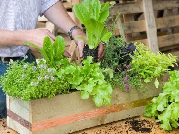 Nhà đẹp,trồng cây trong nhà,trang trí nhà