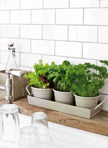 Những ý tưởng trồng cây ngay trong bếp vô cùng thú vị
