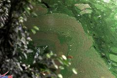Thông tin mới về váng nước lạ trải dài ven hồ Gươm