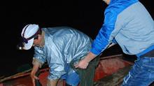 Nửa đêm đi săn 'quý ngư' bạc triệu trên 'địa chỉ đỏ' sông Hồng