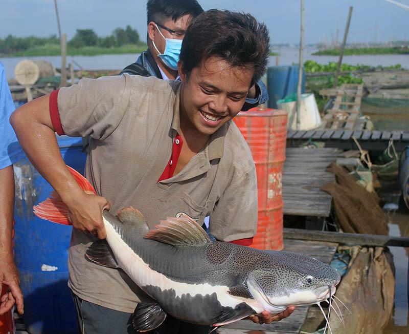 'Thuỷ quái' miền Tây: Ngàn con cá trê hồng đột biến gen kỳ lạ