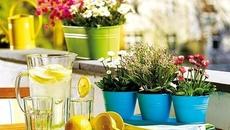Ban công mùa hè đẹp dịu dàng nhờ decor với sắc màu hoa cỏ