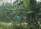 Vụ xác chết ở bụi chuối: Đã bắt được nghi phạm