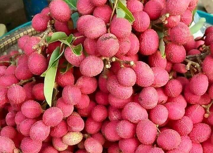 vải thiều,quả rừng đặc sản,quả lạ