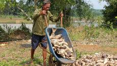 Cá chết trắng đập ở Bình Phước, thiệt hại nhiều tỷ đồng