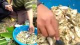 Món gỏi cá sống làm ngay giữa đồng: Bạn có muốn thử một lần