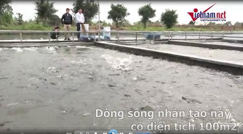 Xây sông nhân tạo nuôi cá, thu tiền tỉ trong vài tháng