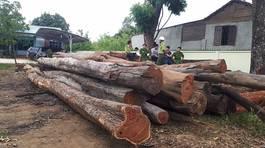 Bộ Công an vây bắt gỗ lậu cực lớn sát đồn biên phòng ở Đắk Lắk