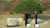 Lãnh đạo Hàn - Triều trồng cây trên vùng phi quân sự