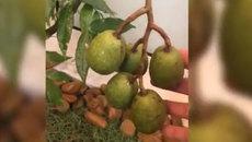 Mỹ Tâm gây sốt với clip giới thiệu 'cây nhà lá vườn' bằng chất giọng không thể 'lầy' hơn
