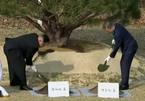 Ý nghĩa việc trồng cây và tản bộ không cần vệ sĩ của lãnh đạo Hàn-Triều