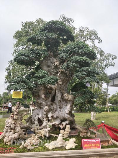 Khách Tàu mua yến sào Việt 300 triệu, dân Việt ăn nhựa cây 10 triệu