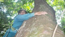 Nghệ An: Kỳ bí khu rừng lim xanh nghìn tuổi độc nhất giữa đồng bằng