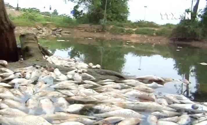 Cá chết trắng dọc 10km sông, bốc mùi hôi thối nồng nặc