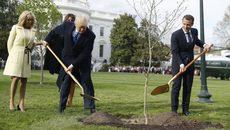 Bí ẩn số phận cây sồi Tổng thống Pháp trồng ở Nhà Trắng