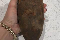 Chó đào được 'khoai tây', cả nhà hốt hoảng