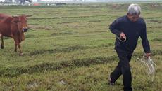 Thanh Hóa yêu cầu kiểm điểm vụ chăn trâu bò phải đóng phí cỏ