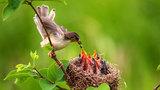 Đừng bao giờ bẫy chim, vì bạn có thể giết chết một gia đình