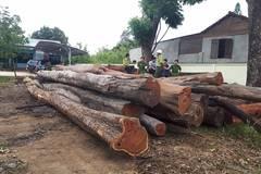 Thông tin bất ngờ vụ bắt trùm gỗ lậu Phượng 'râu' ở Đắk Lắk