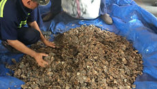 Bắt giữ 7 tấn vảy tê tê trị giá 60 tỷ 'quá cảnh' tại Việt Nam