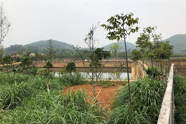 đất lâm nghiệp,công trình sai phép
