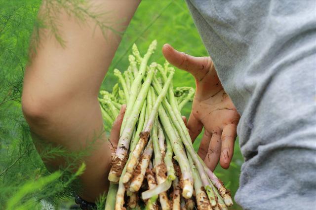 Bỏ công ty riêng về trồng măng tây, thu đều 2 tỷ vào túi
