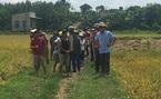 Dân kêu cứu vì bị xã hội đen 'bảo kê' thu hoạch lúa