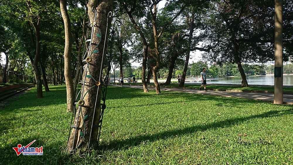 Hà Nội,sưa đỏ,cây xanh