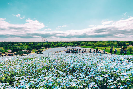 Nhật Bản,Cảnh đẹp