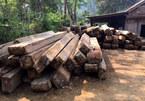 Cách chức trạm trưởng kiểm lâm vụ phá rừng quy mô lớn