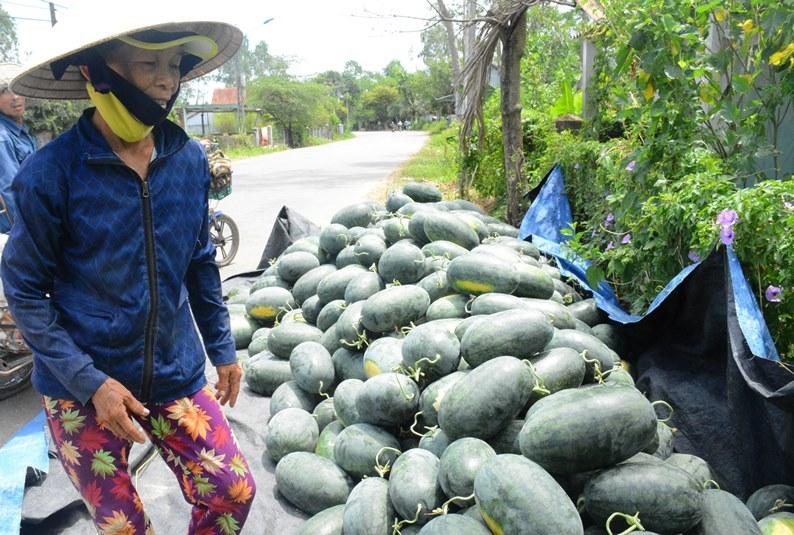 thương lái Trung Quốc,nông sản việt nam,dưa hấu,giải cứu dưa hấu,giải cứu nông sản