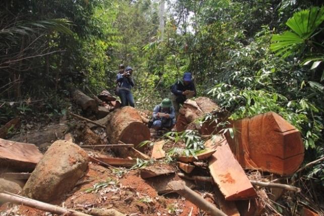 phá rừng,kiểm lâm,Quảng Nam