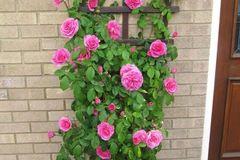 Ngôi nhà mát rượi mùa hè nhờ các giàn hoa leo