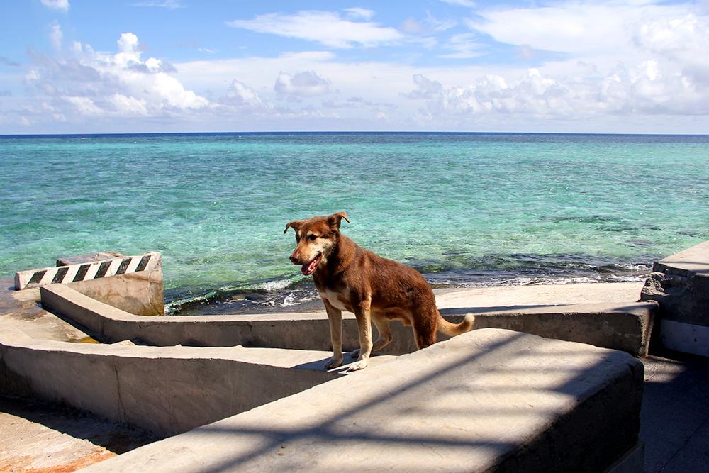 chó,Trường Sa,biển đảo,hải đảo,chủ quyền,Song Tử Tây,đảo Sinh Tồn