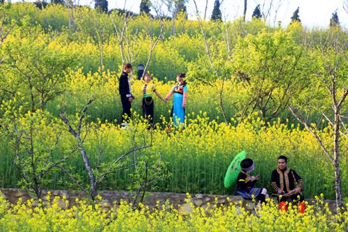Lạc lối giữa muôn sắc hoa trên đỉnh Fansipan