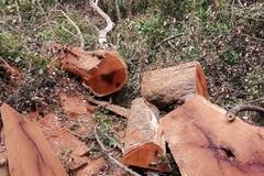 Nóng bỏng phá rừng khắp nơi: Bộ Nông nghiệp ra công điện khẩn