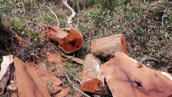 Nóng bỏng phá rừng khắp nơi: Bộ Nông nghiệp ra 1 công điện khẩn