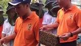 Gã đàn ông bán mật ong có duyên nhất hệ mặt trời
