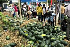 8.000 đồng/kg: Dân Hà Nội chen nhau 'giải cứu' dưa hấu