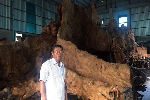 35 tỷ 1 gốc cây khô: Báu vật trong nhà anh thợ mộc
