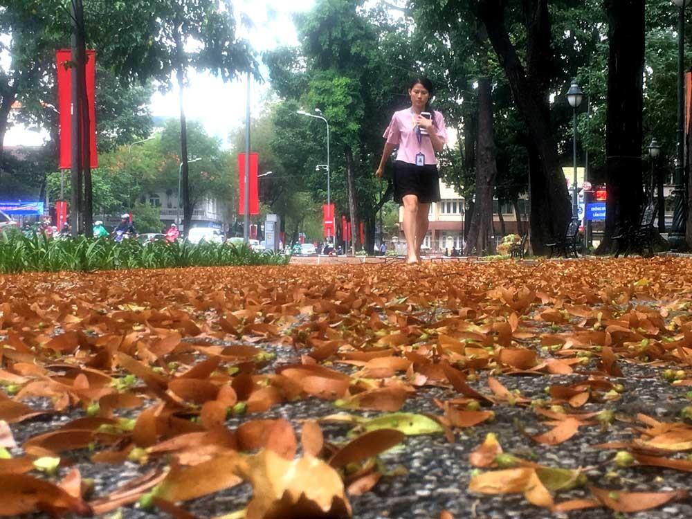 Sài Gòn thơ mộng trong cánh chò nâu xoay tít theo chiều gió