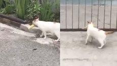 Đường về nhà quá gian nan với chú mèo này
