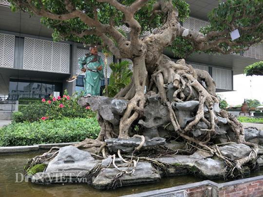 cây cảnh,cây sanh,siêu cây,chơi cây