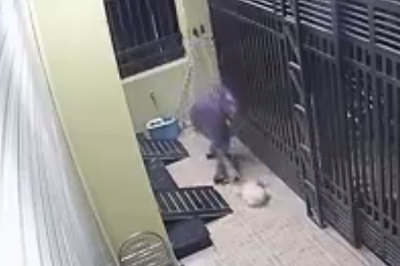 Trộm chó ngày càng manh động và liều lĩnh