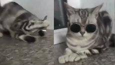 Phải đeo kính theo phong cách của mèo mới có... thần thái