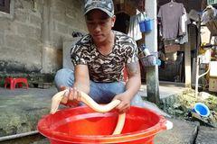 Huế: Đổ xô xem lươn 'bạch tạng' dài hơn nửa mét, nặng gần 1kg