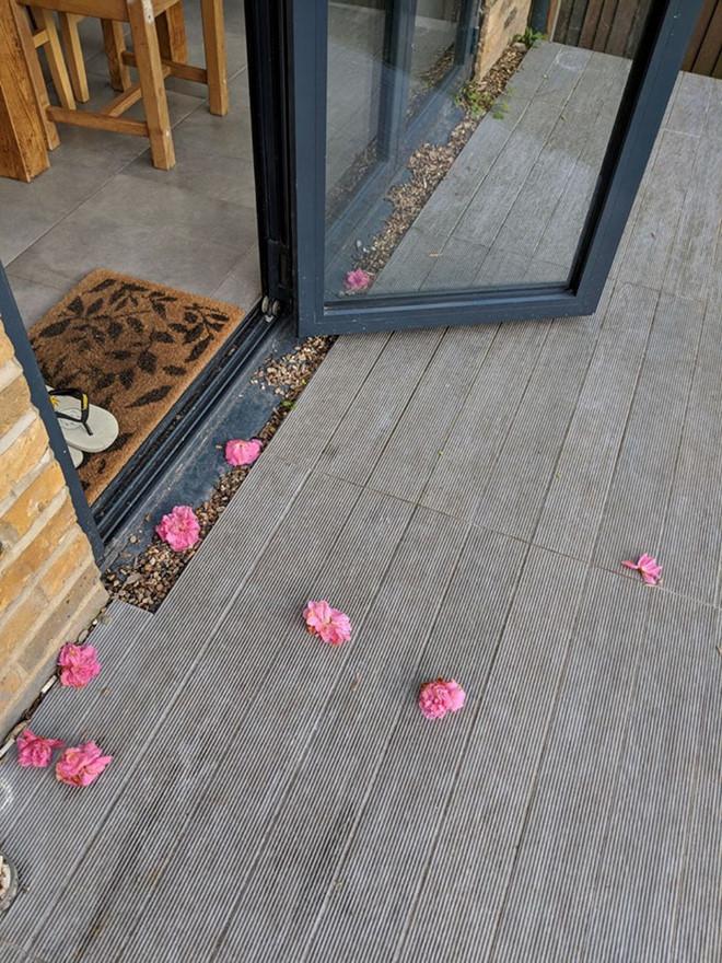 nhung bong hoa truoc cua nha rosei