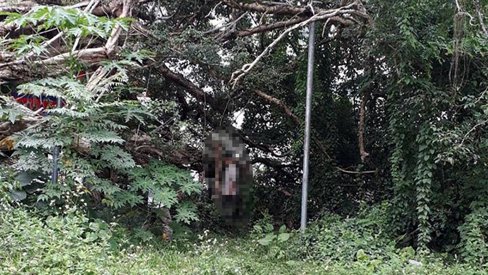 Bị vu trộm điện thoại, người đàn ông treo cổ tự tử