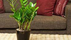 Cách chọn cây phong thủy trong phòng khách