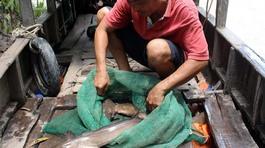 'Quái ngư' miền Tây, liều mình săn cá độc 'đau thấu trời xanh'